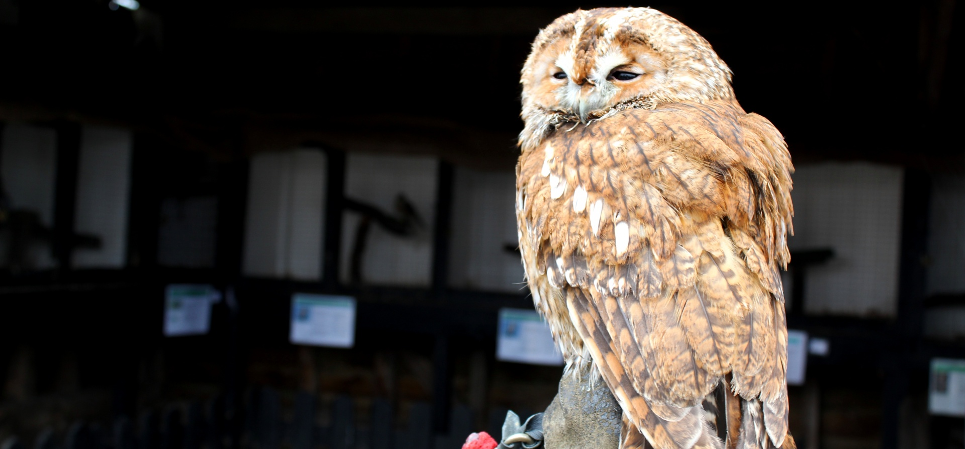 British Birds of Prey Experience in Bedfordshire-8