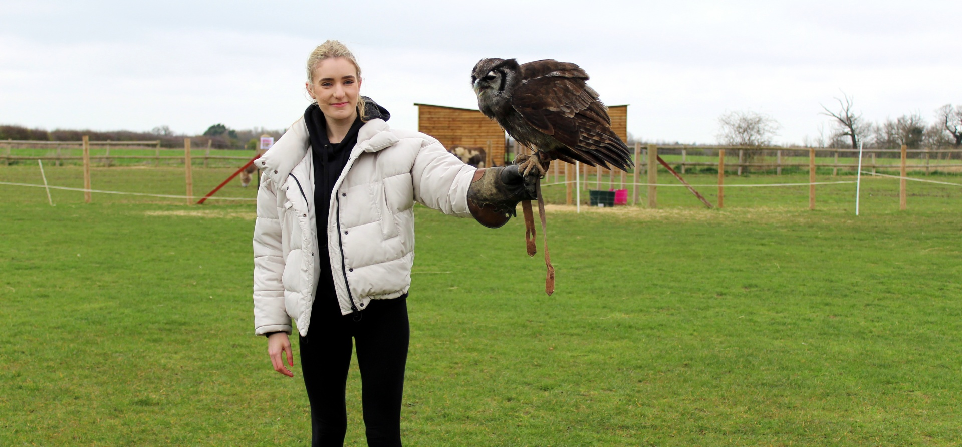 British Birds of Prey Experience in Bedfordshire-6