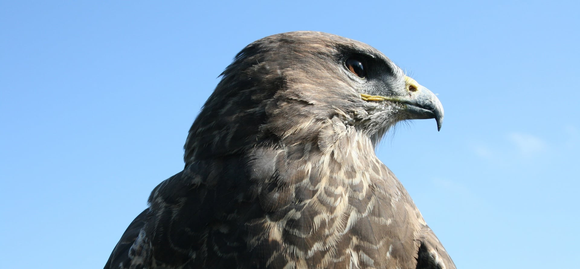 Bird of Prey Full Day Experience - Herefordshire-1