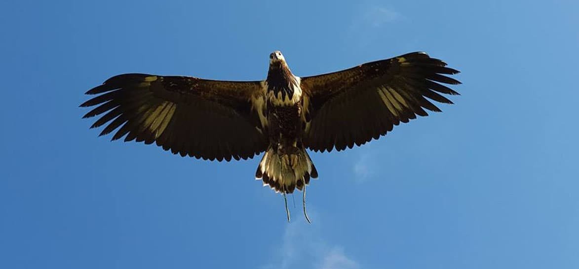 Full Day Falconry Experience - Fife-6