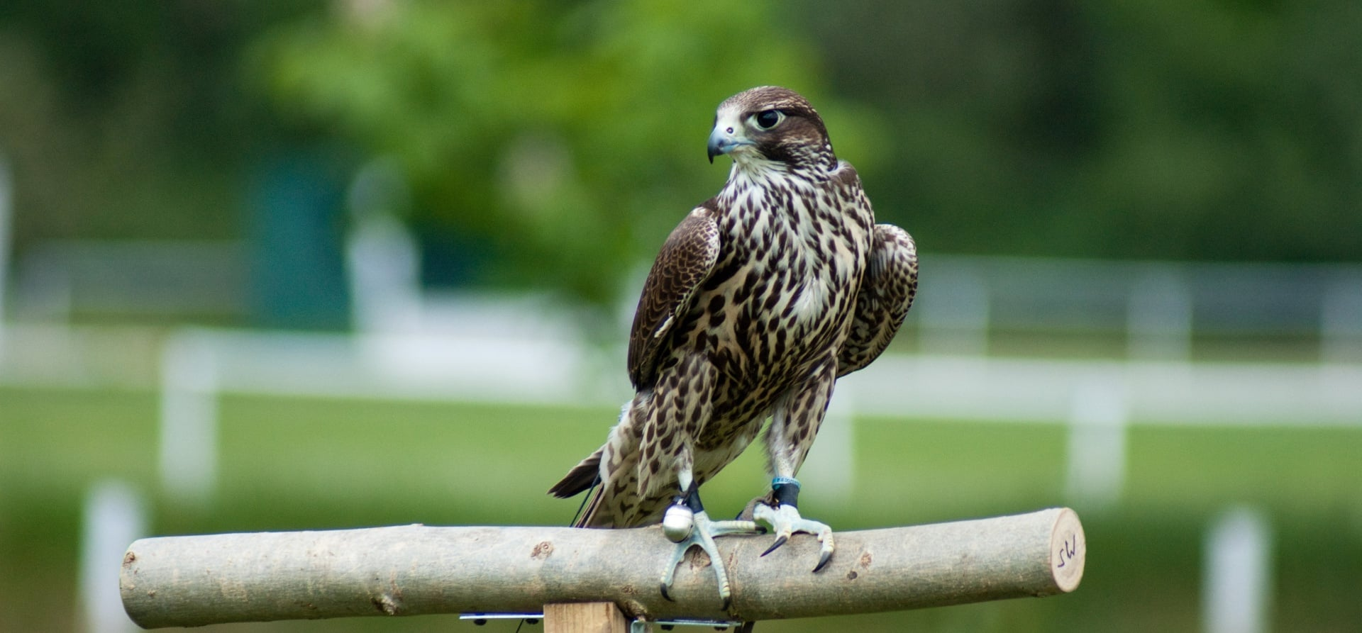 Bird of Prey Full Day Experience - Herefordshire-2