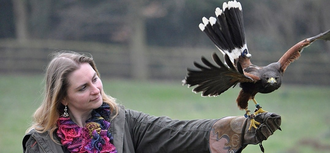 VIP Oxford Falconry Experience - Full Day-4