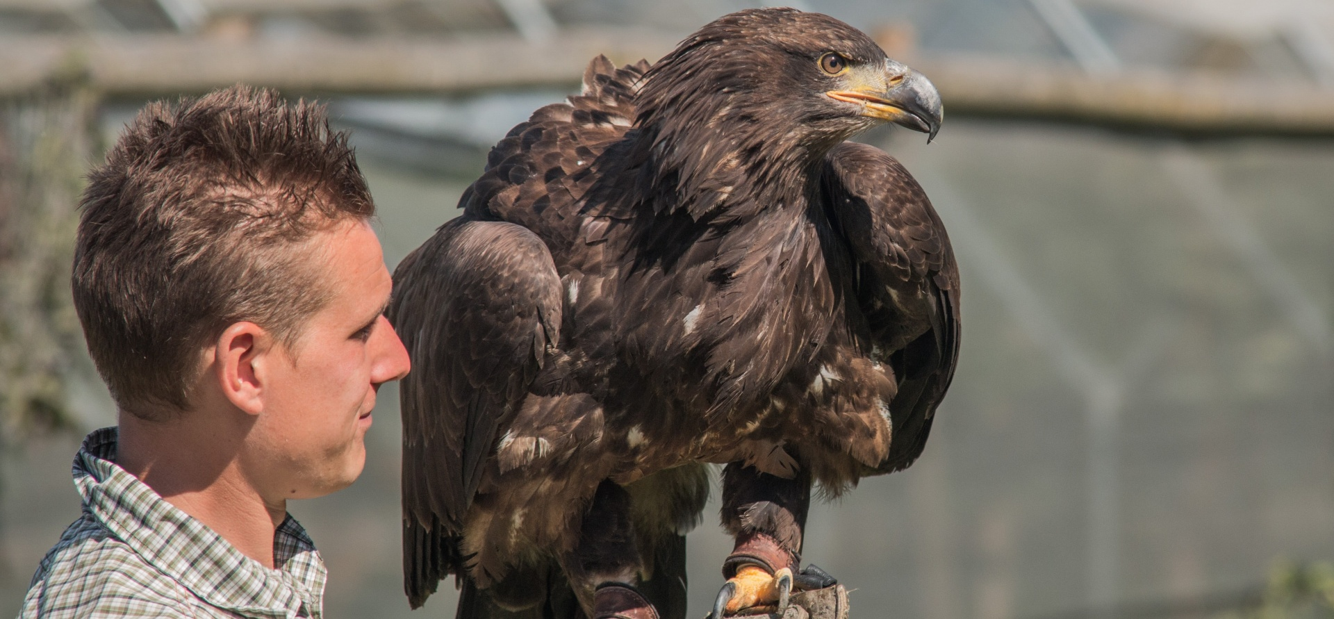 VIP Oxford Falconry Experience - Full Day-2