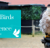 Staff Review: British Birds of Prey Experience in Bedford