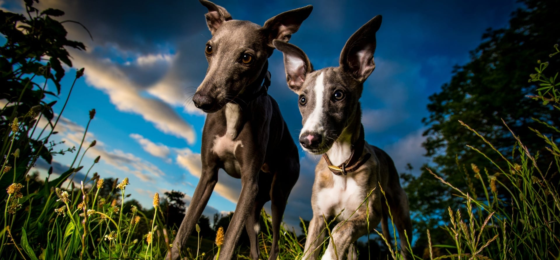 90 Minute Dog Photoshoot In Exeter