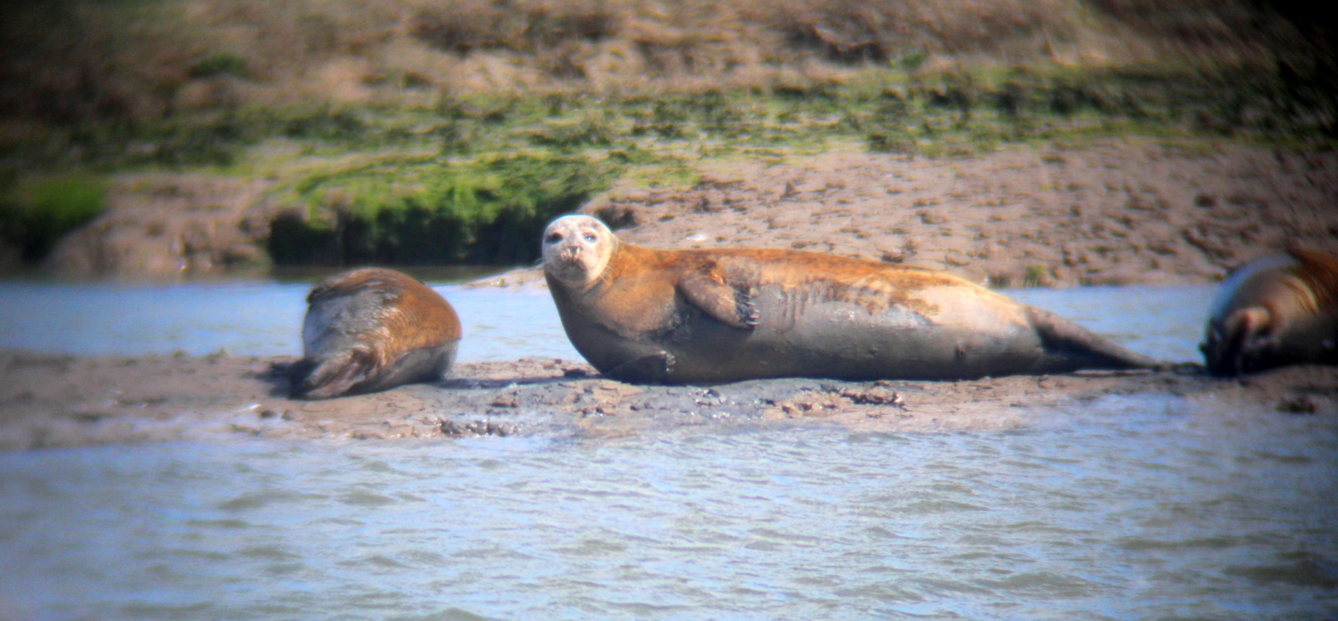 Adults Seal Watching Experience in Essex-7