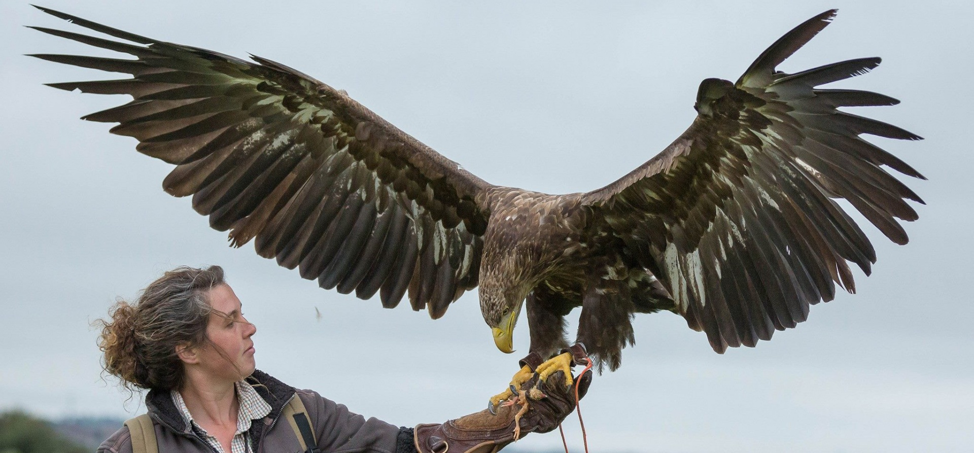 Full Day Falconry Experience - Fife-1