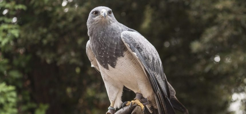 Half Day Owl And Eagle Experience In Bedfordshire