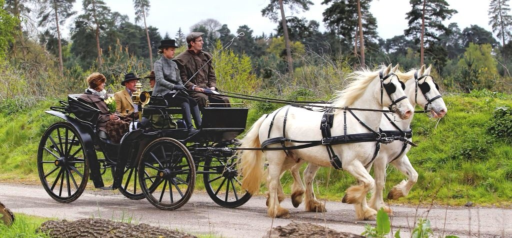 Sussex Champagne Picnic Horse Drawn Carriage Ride for Two-2