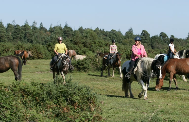 Horse-Riding-Experience-in-the-New-Forest-Hampshire.JPG