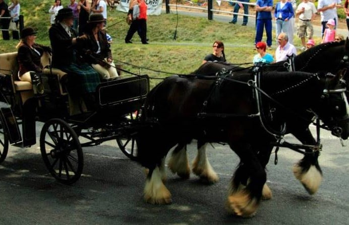 Horse-and-Carriage-Experience-Day-Chester.jpg