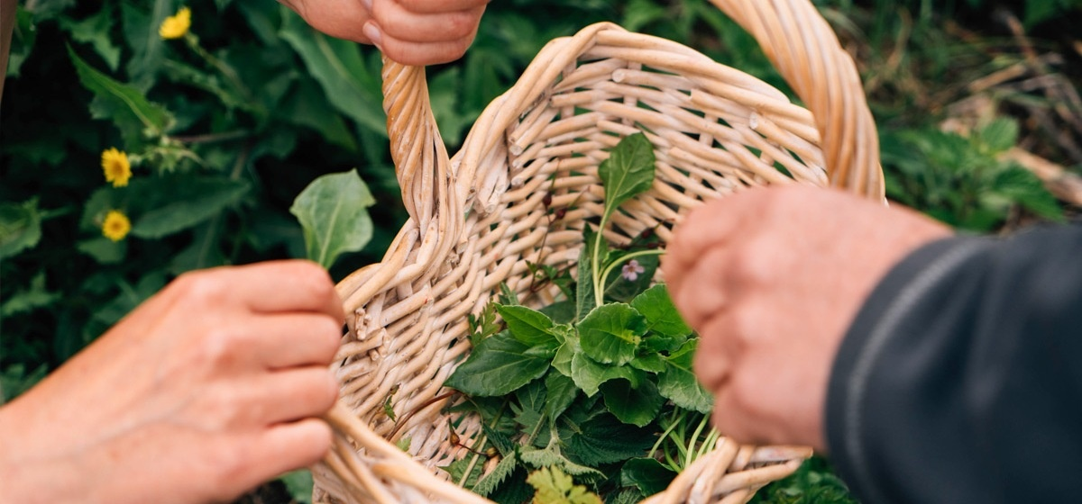 Foraging and Wild Cookery Course-7