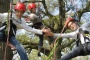 /images/Isle of Wight Tree Climb Experience-1920x1080-resize.jpg