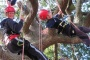 /images/Isle of Wight Tree Climbing Experience-1920x1080-resize.jpg