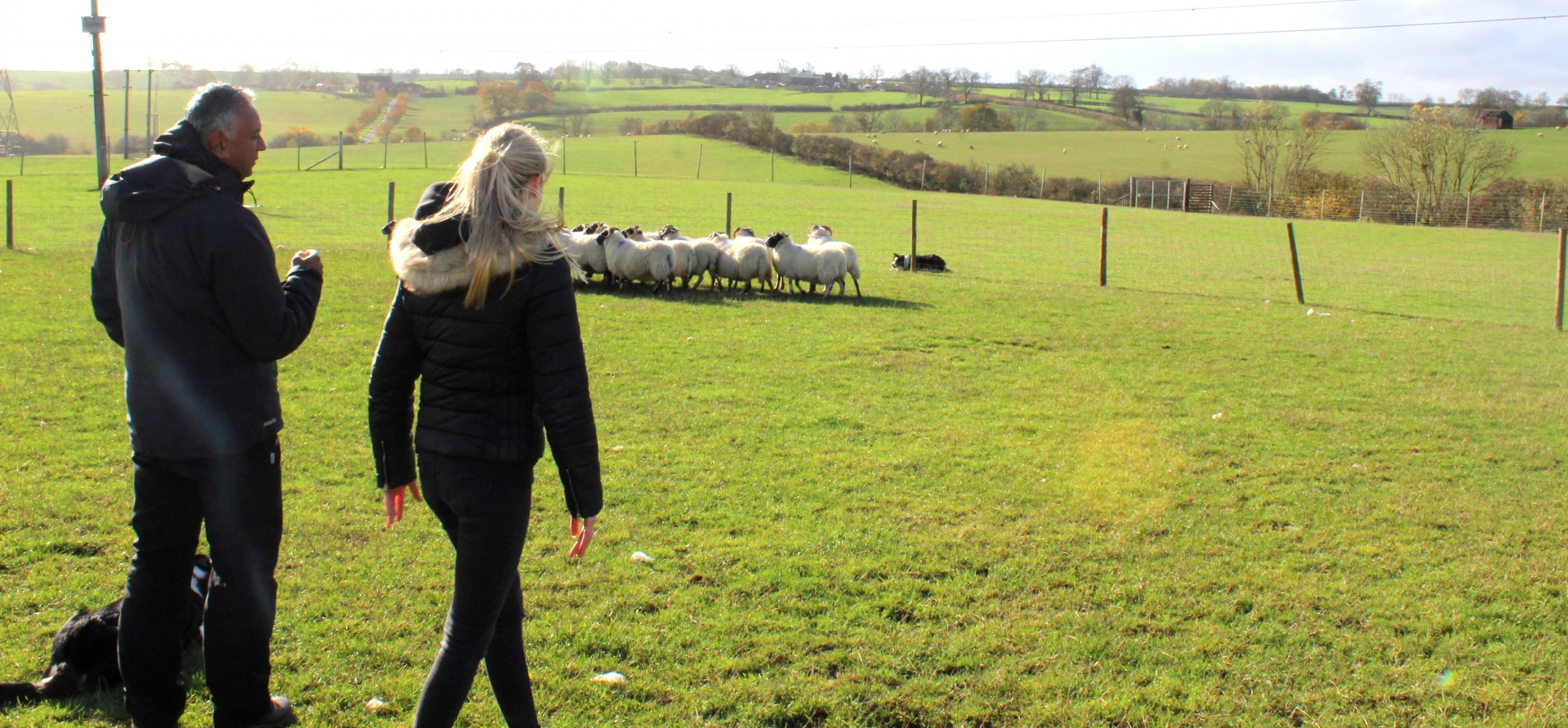 Sheepdog Training Experience - Leicestershire-7