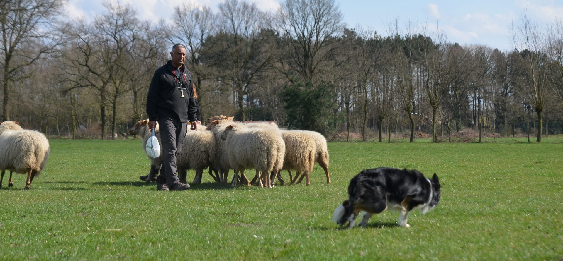 Sheepdog Training Experience for Two - Leicestershire-3
