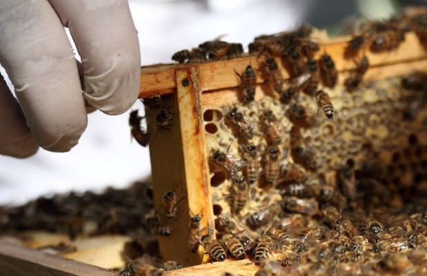 New-bees-on-frames.jpg