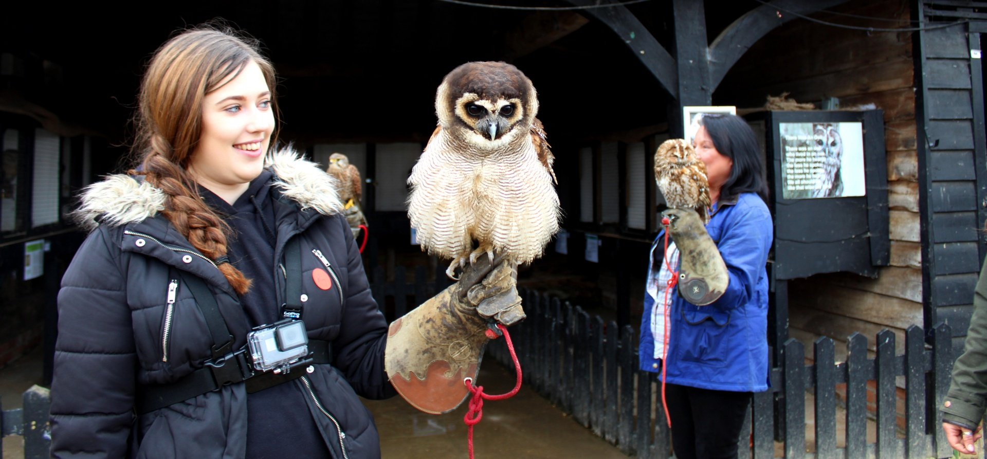 British Birds of Prey Experience in Bedfordshire-7