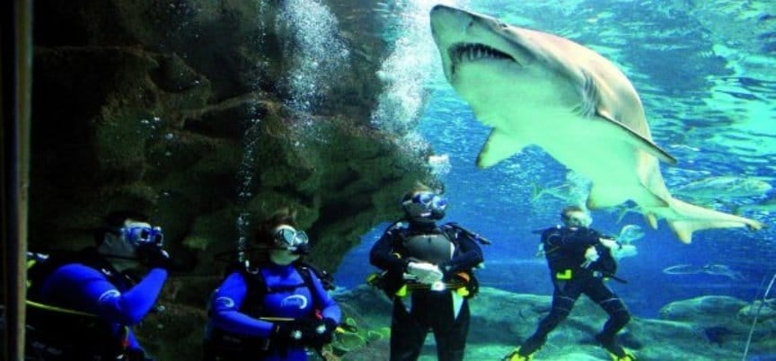 Shark Diving Experience - Scotland-3