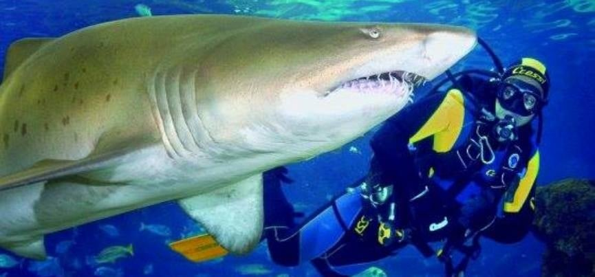 Shark Diving Experience - Scotland-1