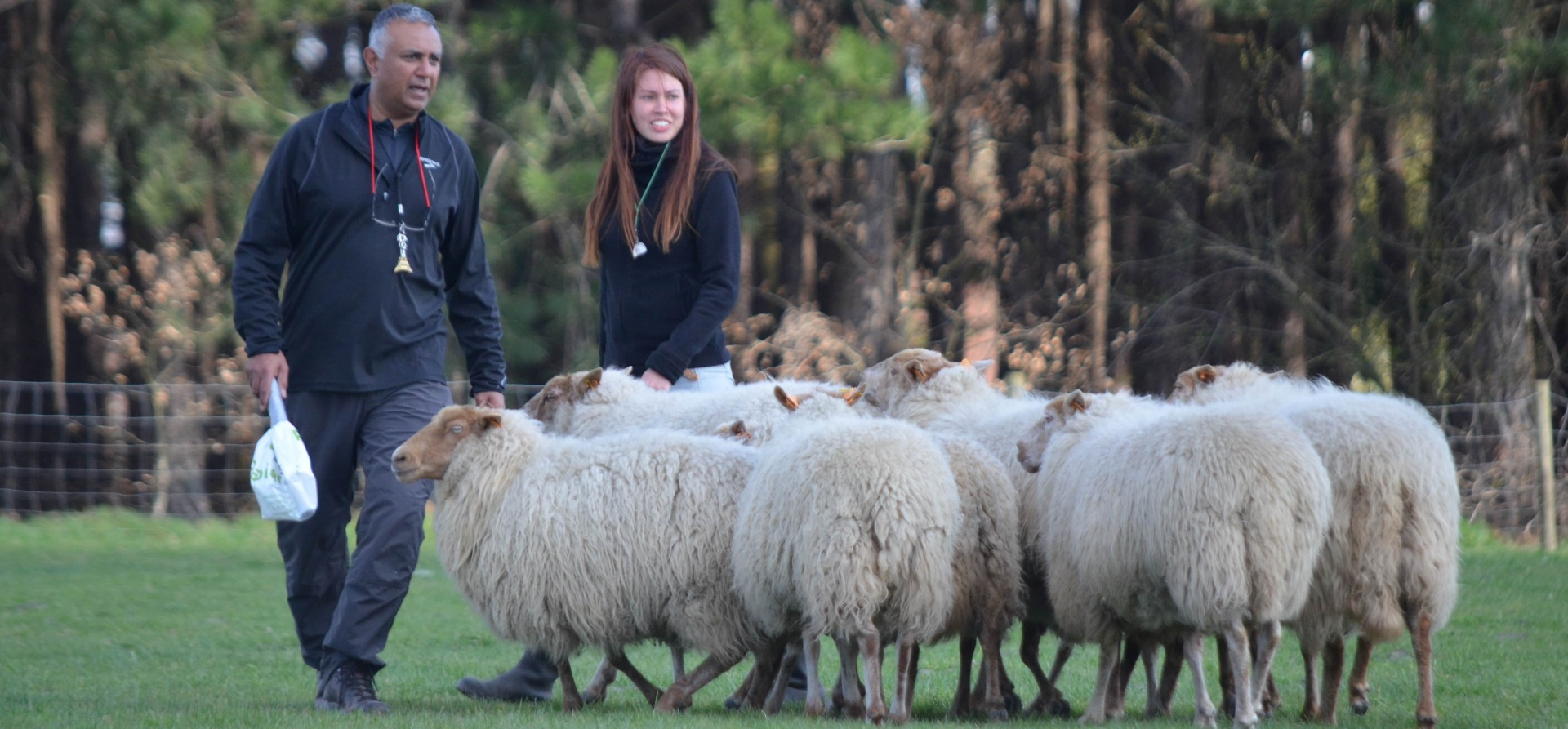 Sheepdog Training Experience for Two - Leicestershire-10