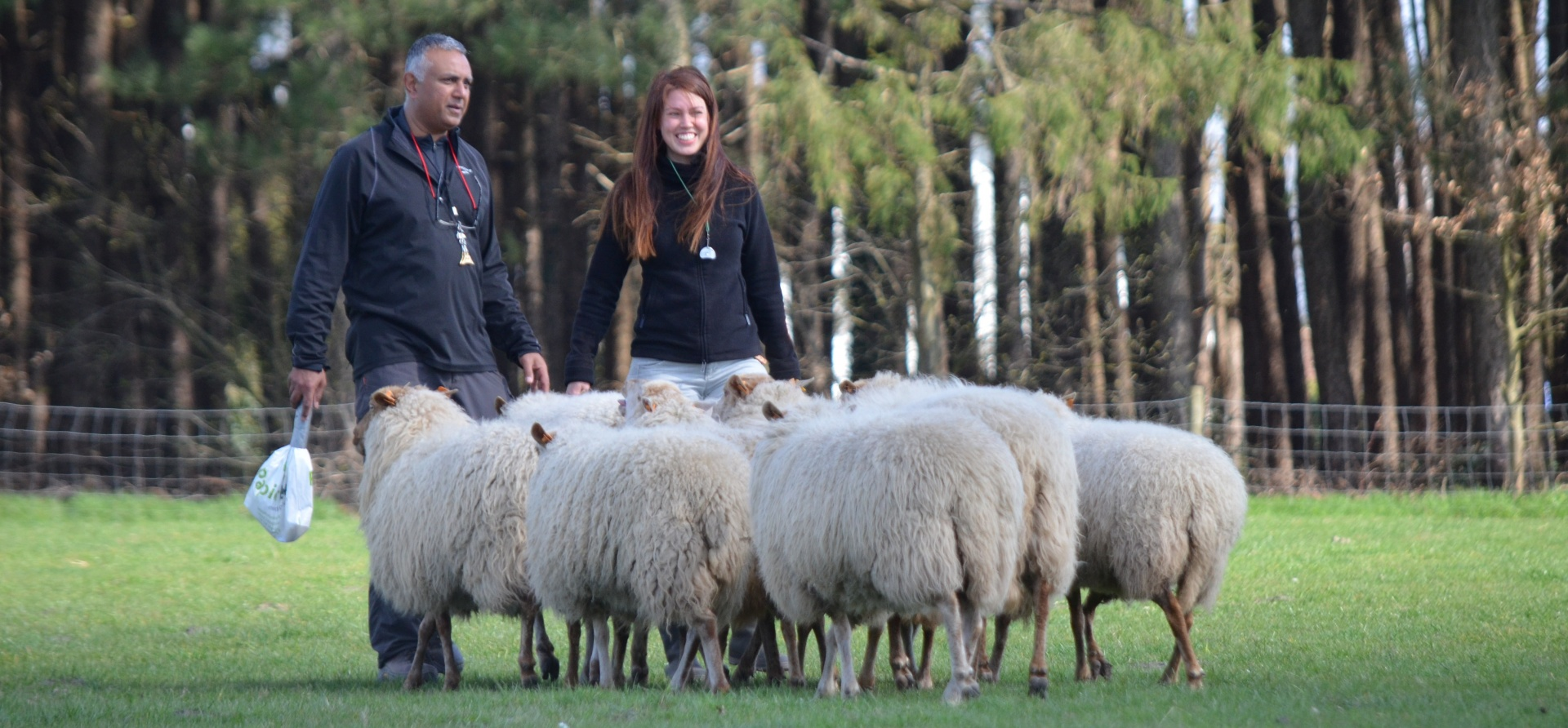 Sheepdog Training Experience for Two - Leicestershire-6