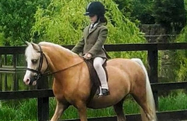 Surrey-Horse-Riding-Lesson-Beginner-Intermediate-Advanced.jpg