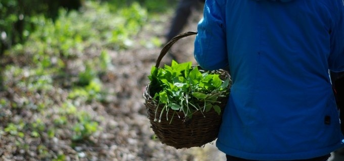 Foraging and Wild Cookery Course-11