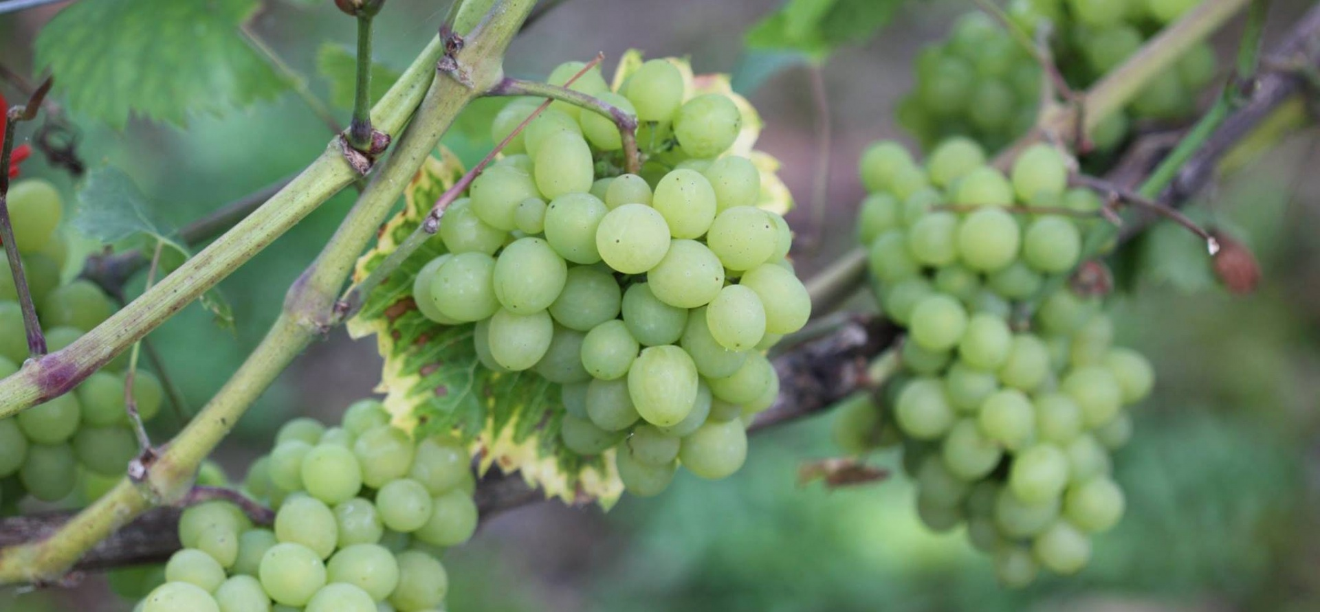 Shropshire Vineyard Tour And Wine Tasting For Two-5