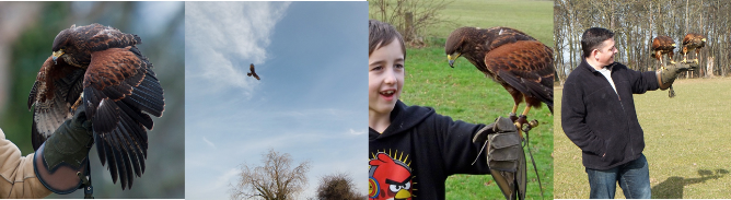 Falconry Experiences Header 1
