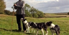 Expert Interview with our Sheep Dog Trainer
