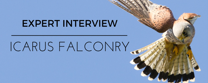 bird-of-prey-falconry-blog-interview