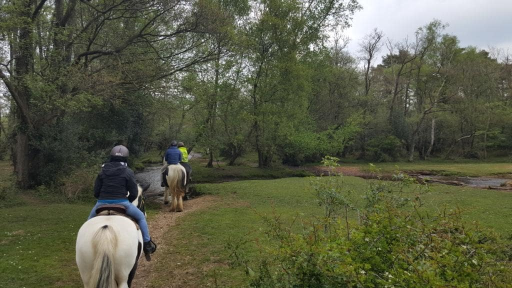 new-forest-horse-riding-western-trail-in-hampshire