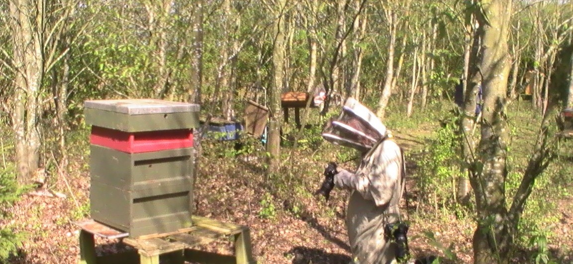 Beekeeping Experience Day Bedford-1
