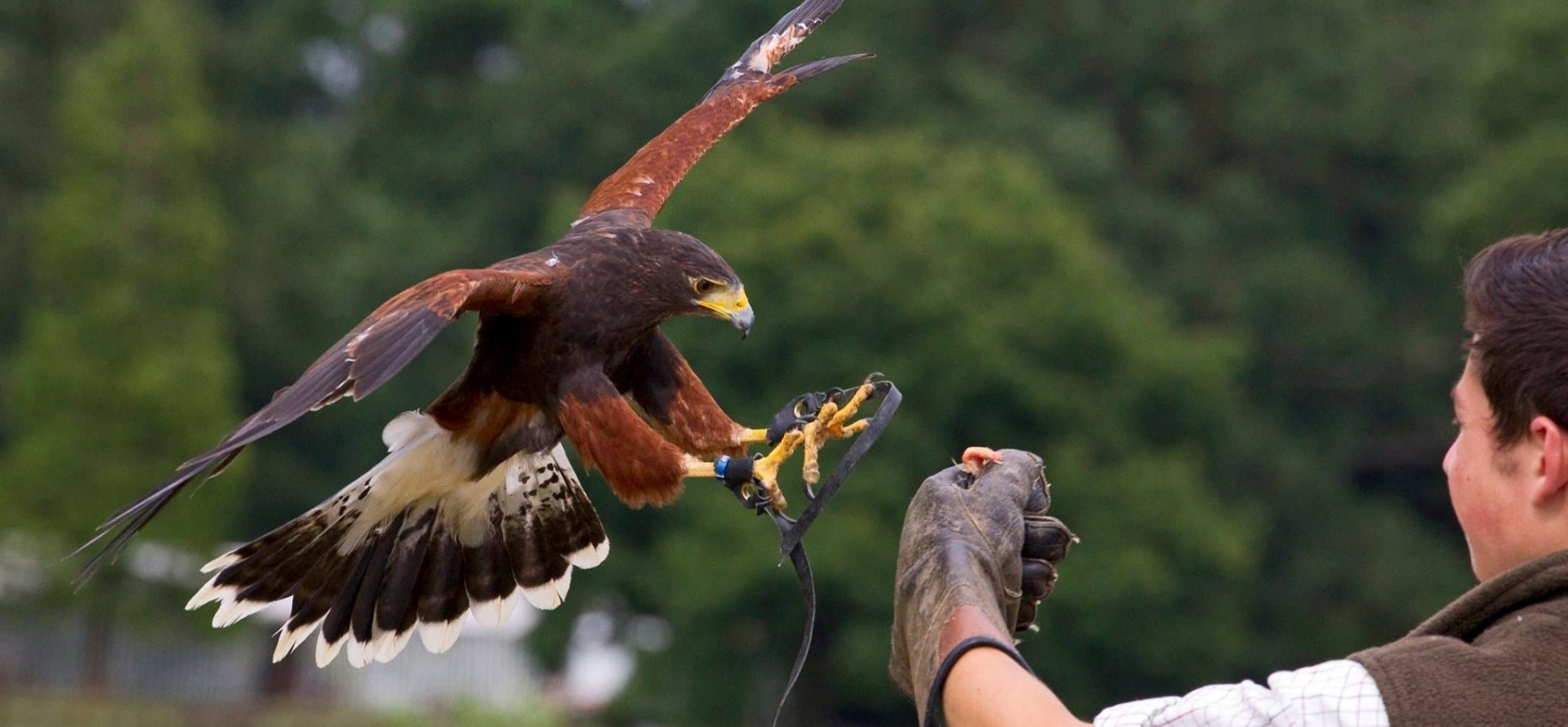 Bedfordshire Bird Of Prey Experience - Half Day-5