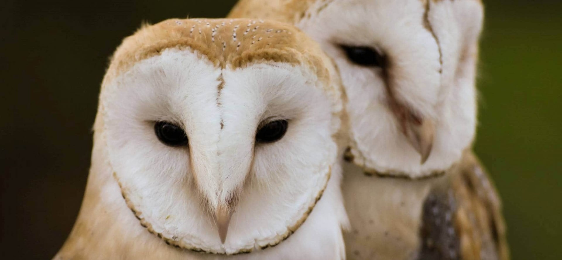 Half Day Owl Experience - Bedfordshire-3