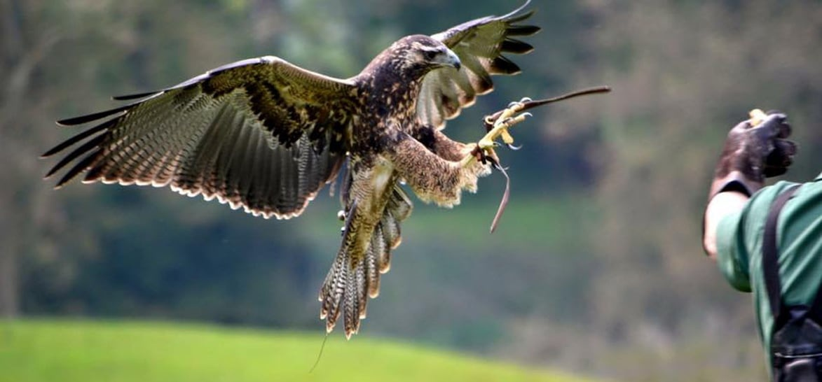 Half Day Falconry And Owl Experience - Northampton-1
