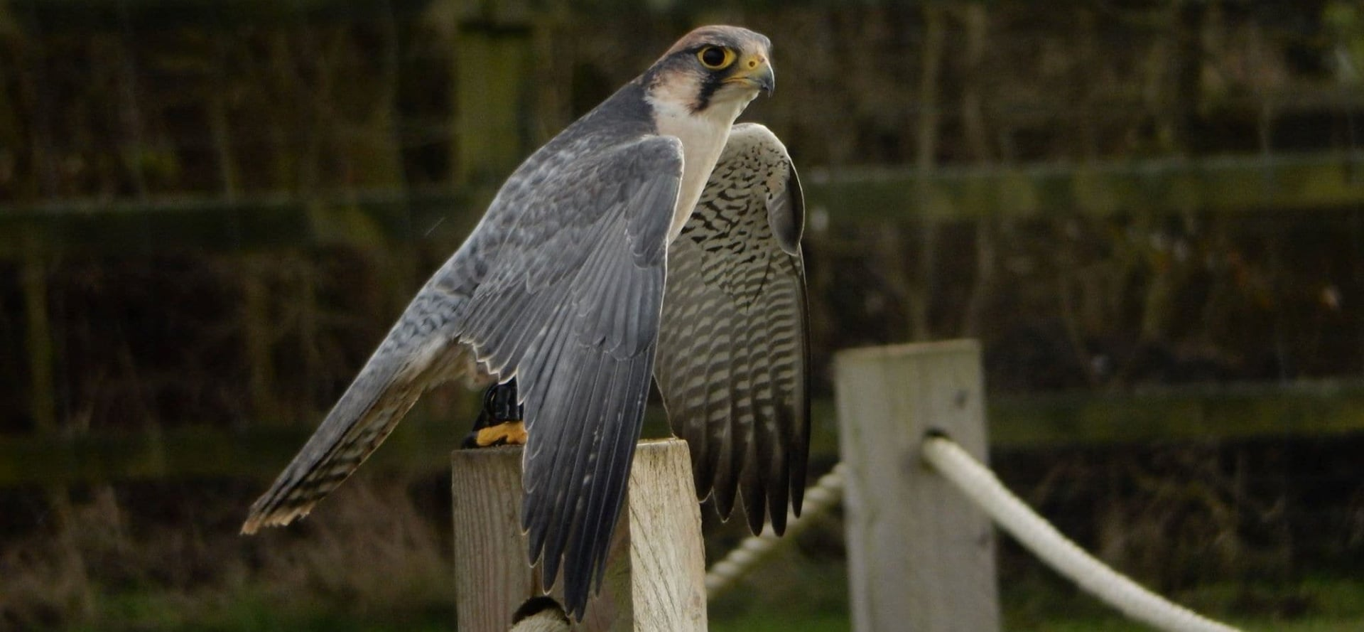Bedfordshire Bird Of Prey Experience - Half Day-4