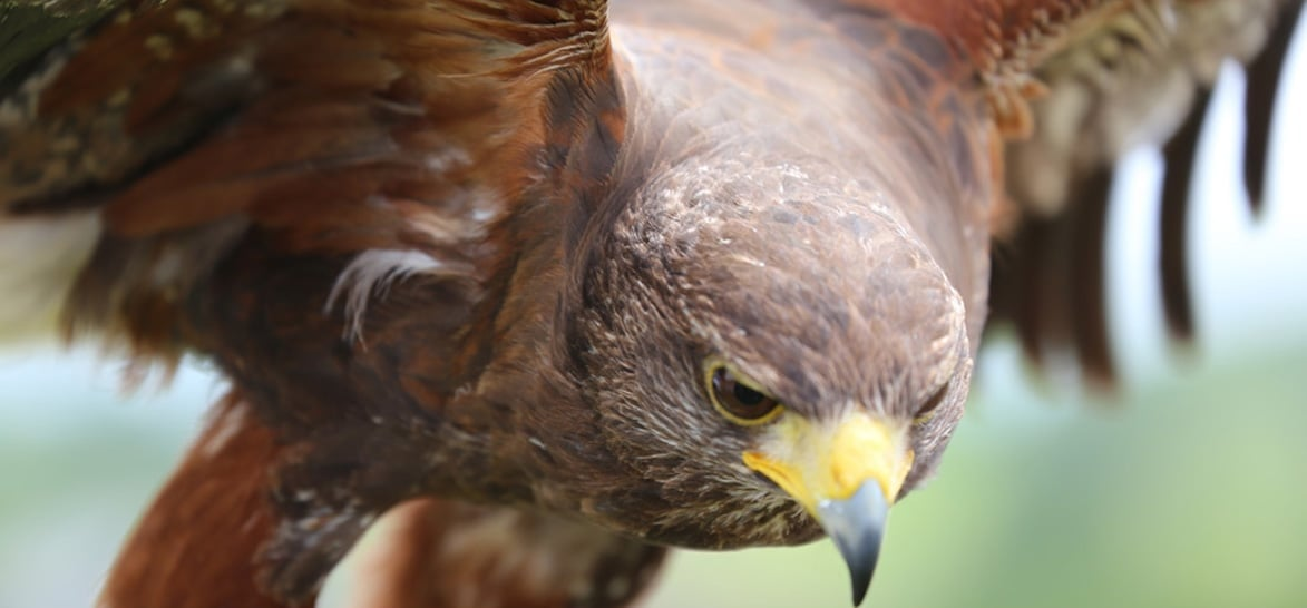 Full Day Falconry Experience - Fife-5
