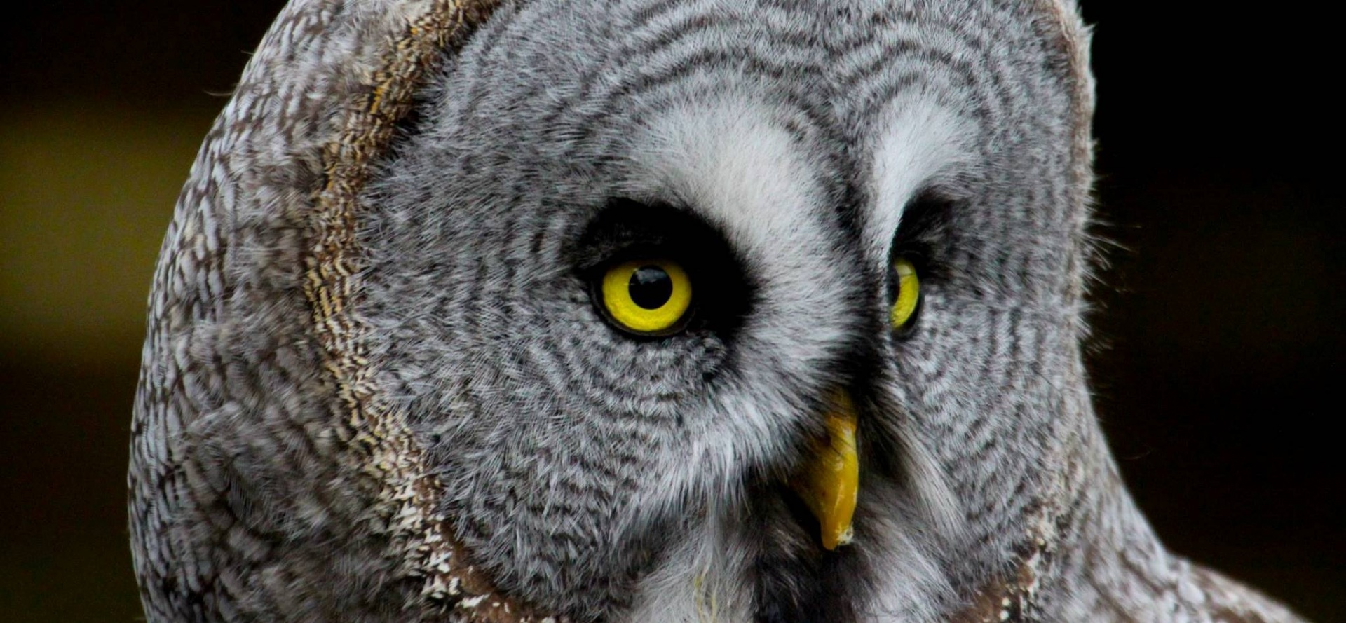 All Day Bird Of Prey Photography Course In Cheshire