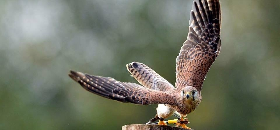 Cheshire Falconry Experience - Family-4