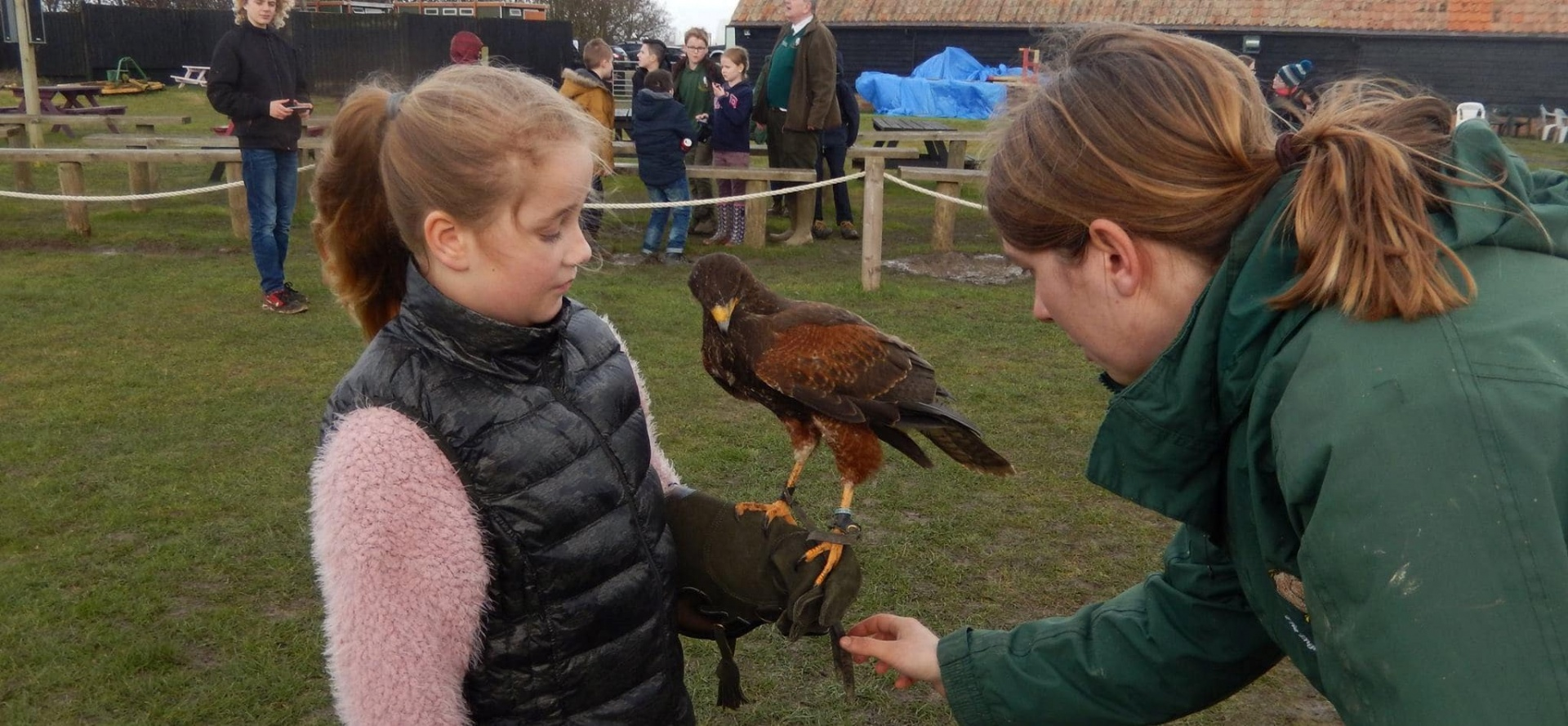 Bedfordshire Bird Of Prey Experience - Half Day-2