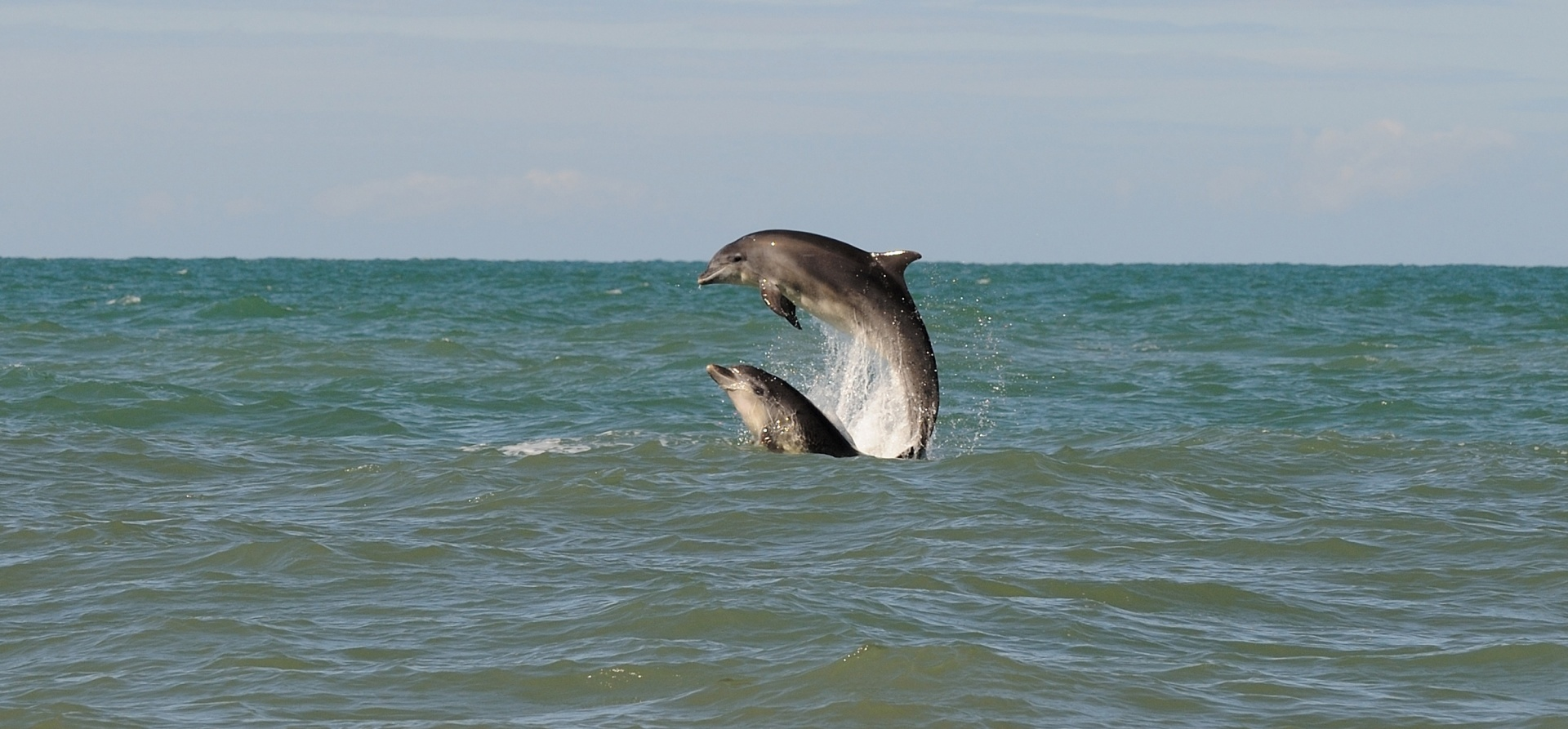New Quay Dolphin Spotting Experience for Two-3
