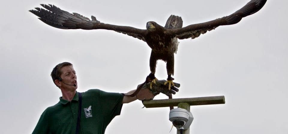 All Day Eagle Handling Experience in Cheshire-5