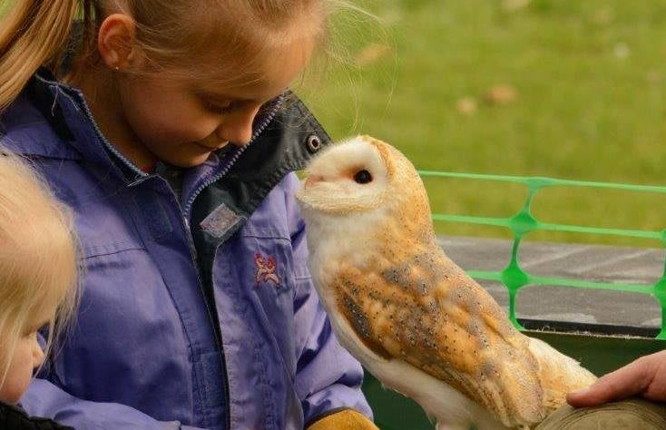 falconry-experience-for-juniors-in-lincolnshire.jpg