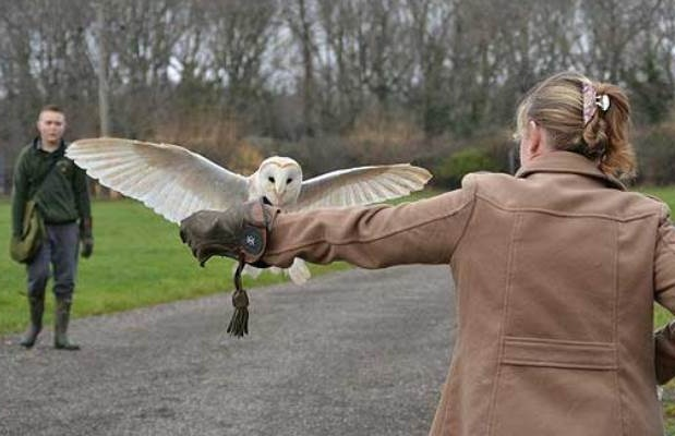 falconry-experience-isle-of-white.jpg