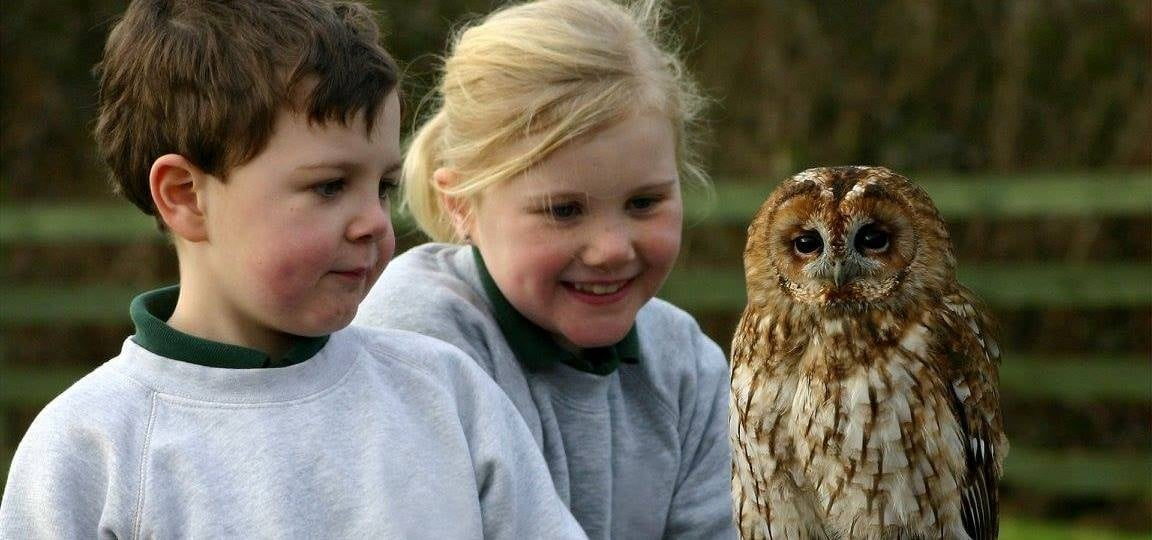 Cheshire Falconry Experience - Family-3