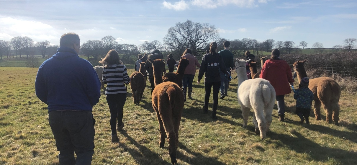 Parent and Child Alpaca Experience for 2 in Warwickshire-2