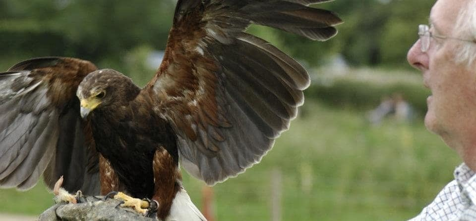 Falconry Experience Warwickshire - Half Day-5