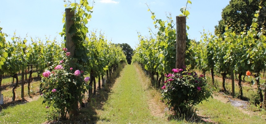 Sussex Wine Tasting and Vineyard Tour-1